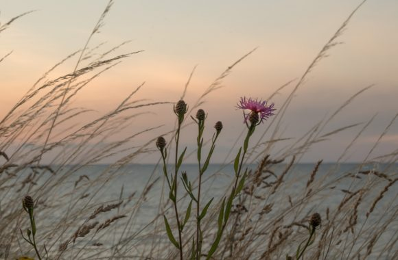 Wangels Steilküste